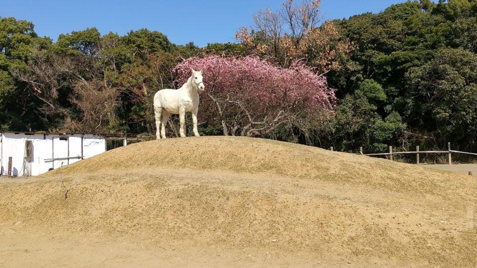 梅の木をバックに日光の日差しを楽しむぽてと